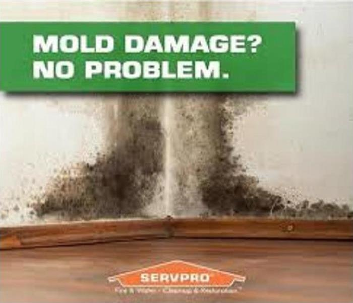 Mold damage tips