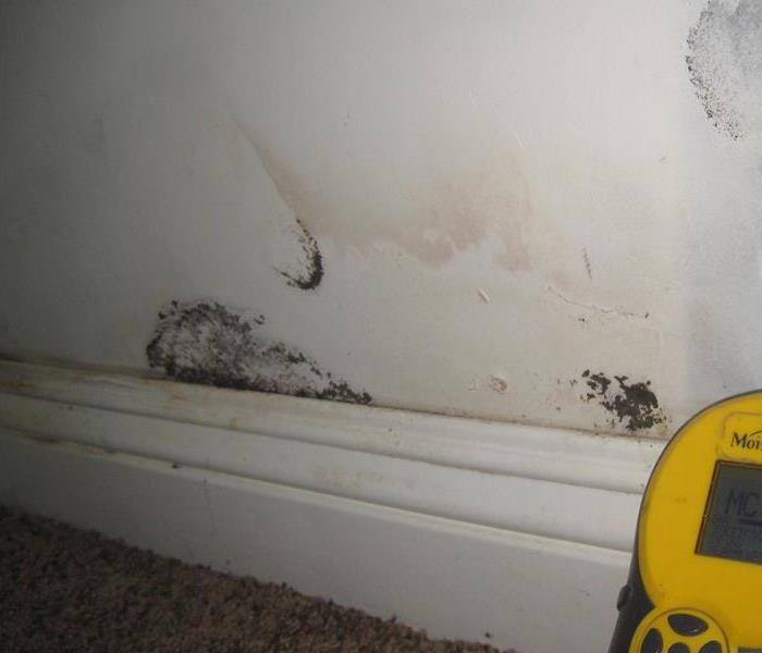 Why SERVPRO What's the Difference between Mold Removal and Remediation?